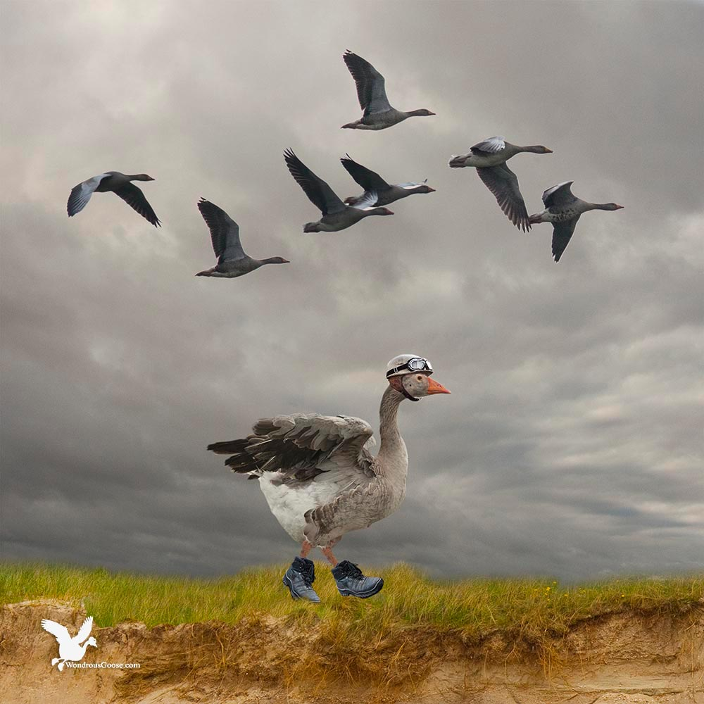 The walking goose-Limited Prints