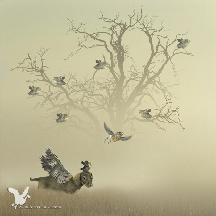 yora the birdwhisperer